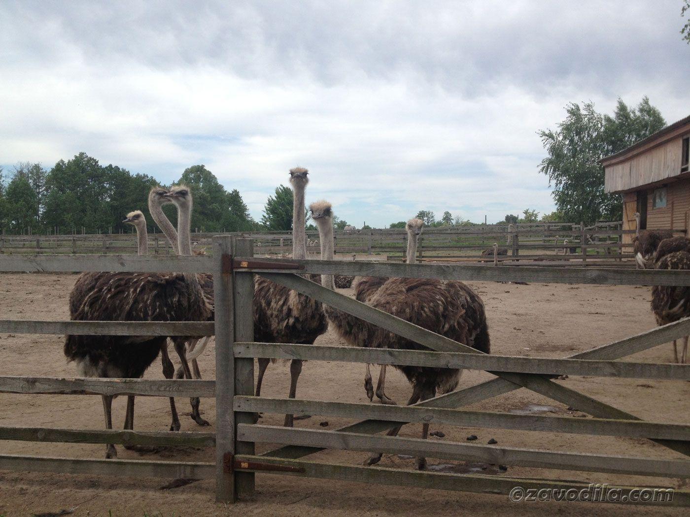 Ферма страусов и Украинское село
