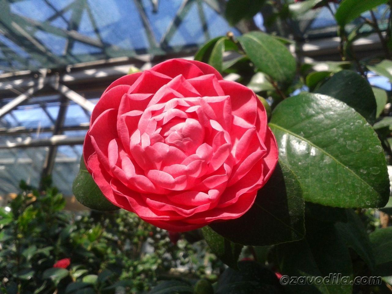 Отдых в ботаническом саду