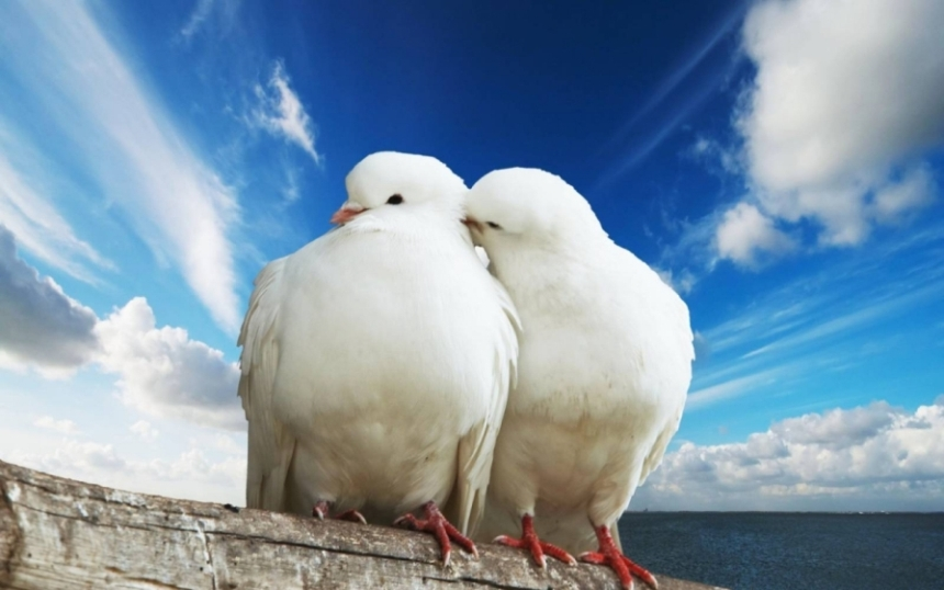 как сохранить брак и отношения