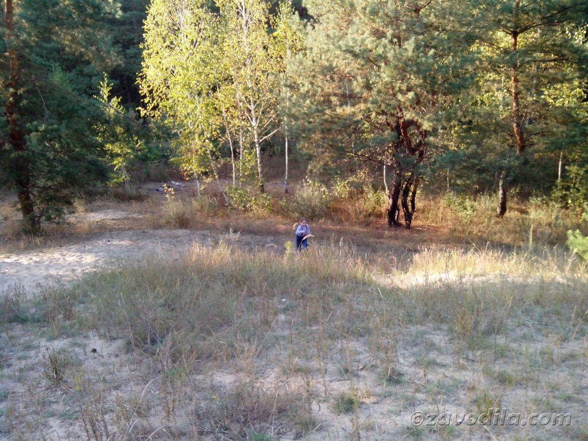 отдых семьей в лесу