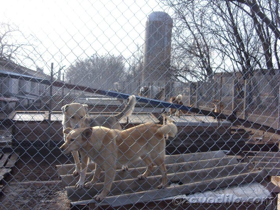 Рассказ о поездке в приют для животных