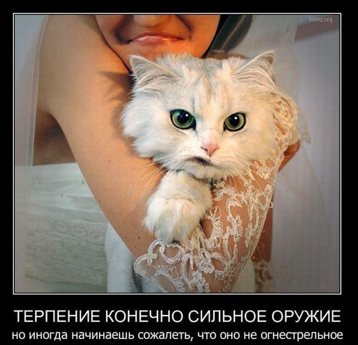 Кто в доме хозяин? После кота, конечно!