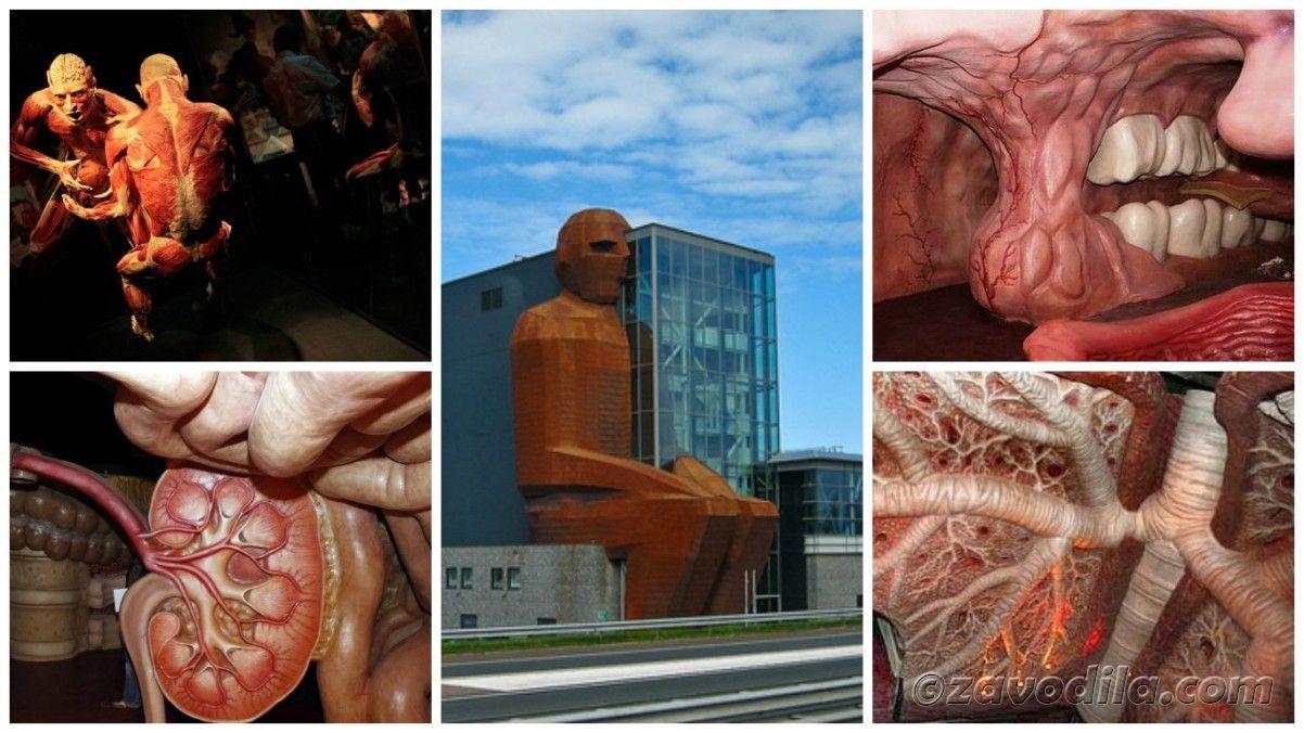 самые необычные музеи мира - Музей человеческого тела в Лейдене