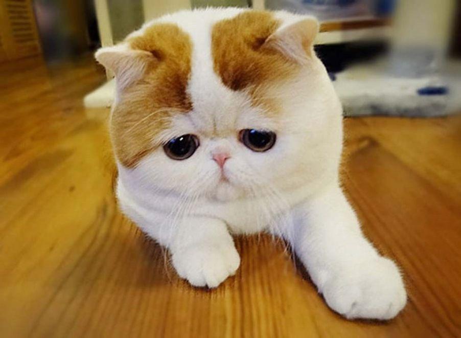 Отношения человека к кошкам в разных странах мира 1