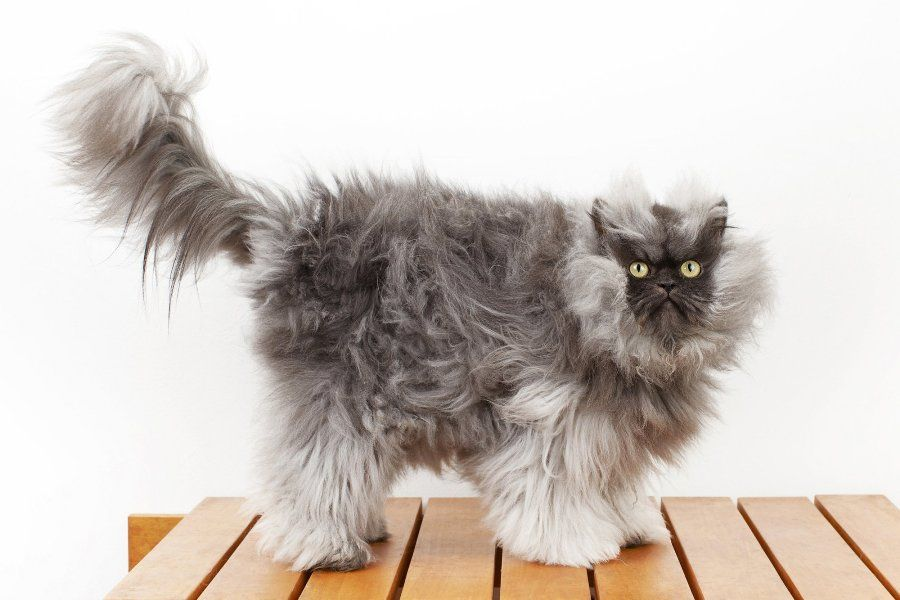 Отношения человека к кошкам в разных странах мира