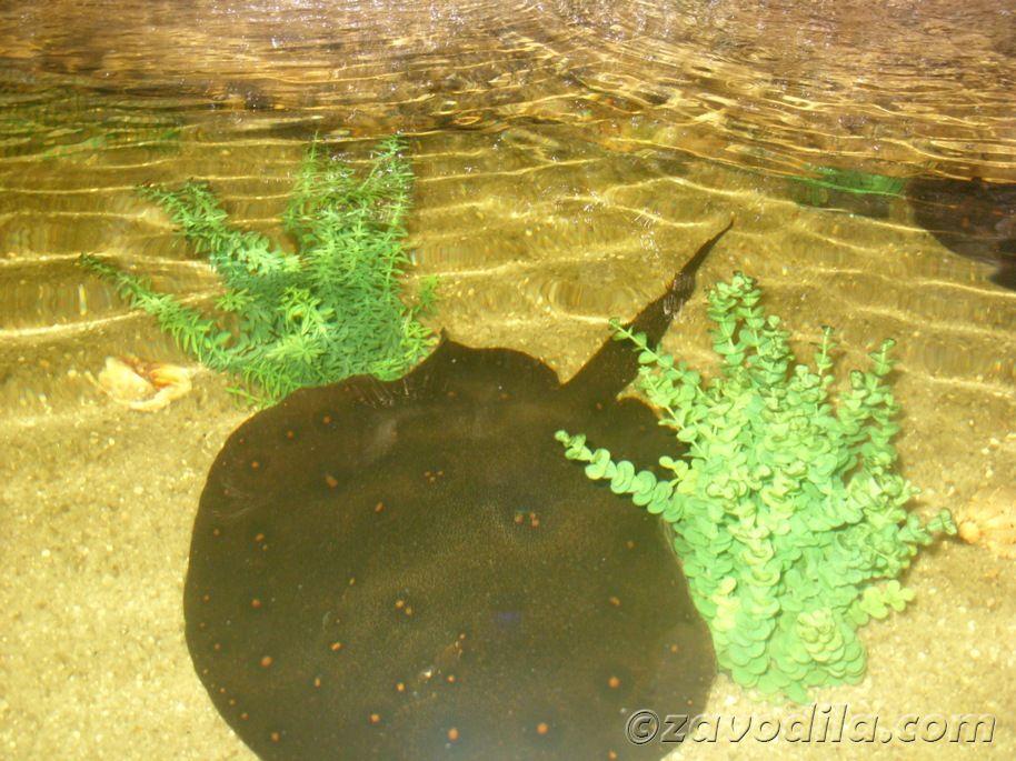 выставка экзотических животных в ТРЦ