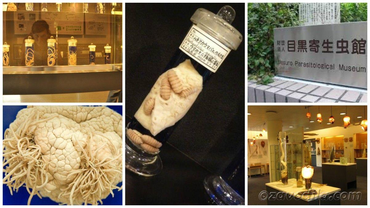 Самые страшные и жуткие музеи мира, музей паразитологический Япония