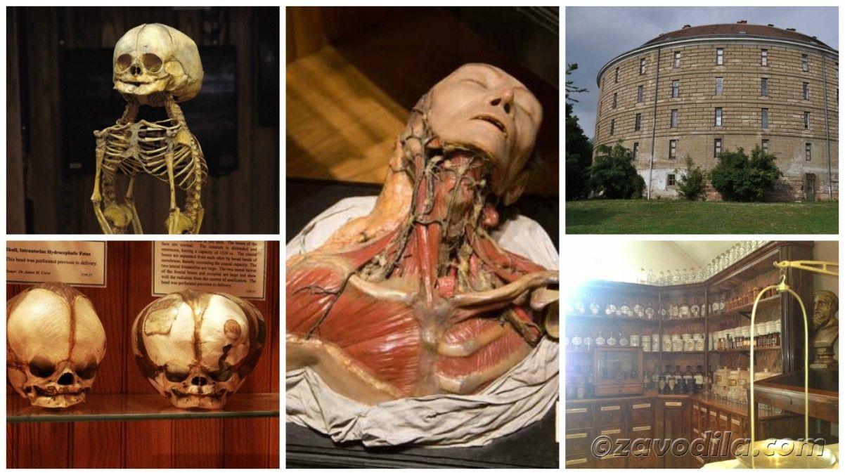 Самые страшные и жуткие музеи мира, Башня сумасшедших, Вена, Австрия