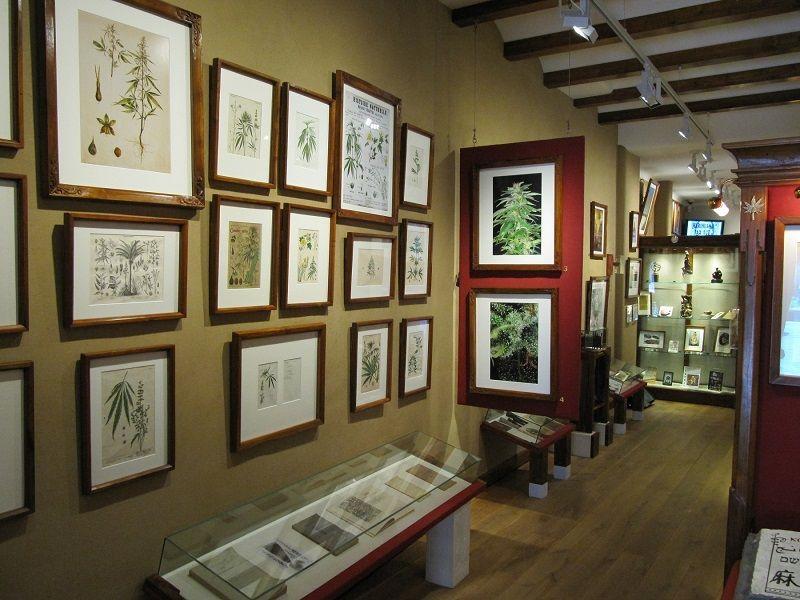 Амстердам: музей конопли