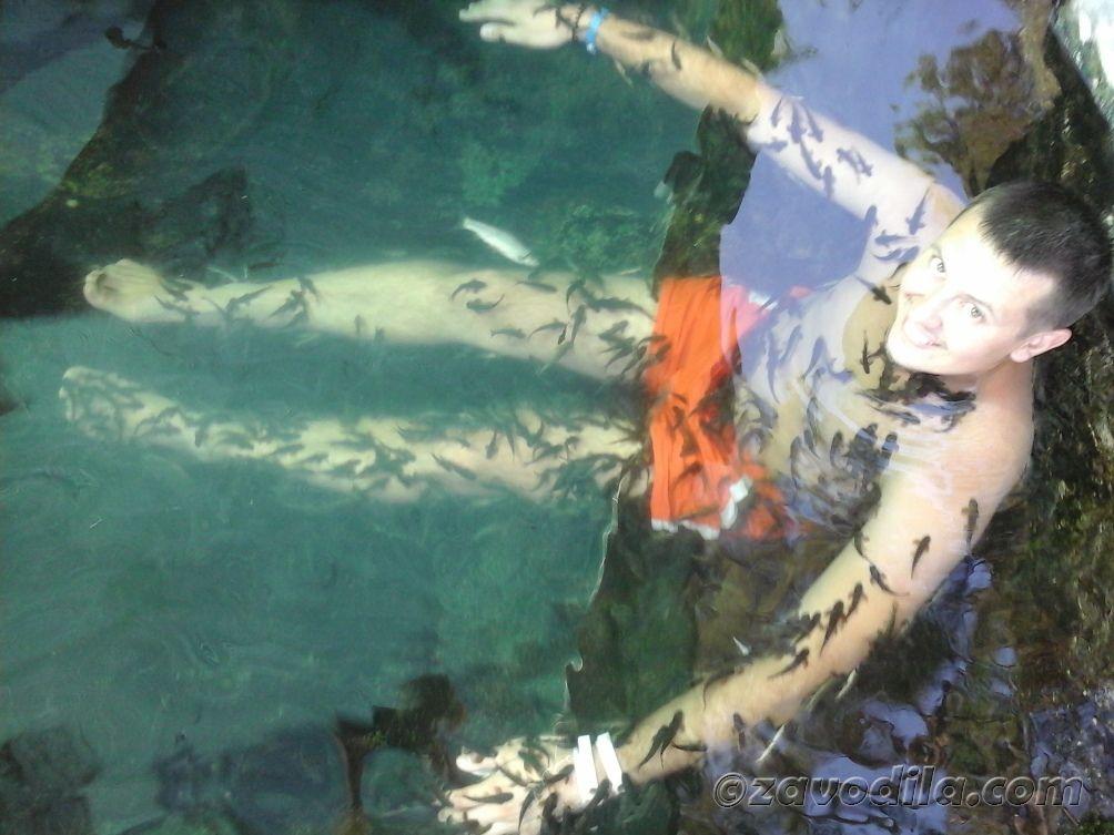 fish spa рыбки