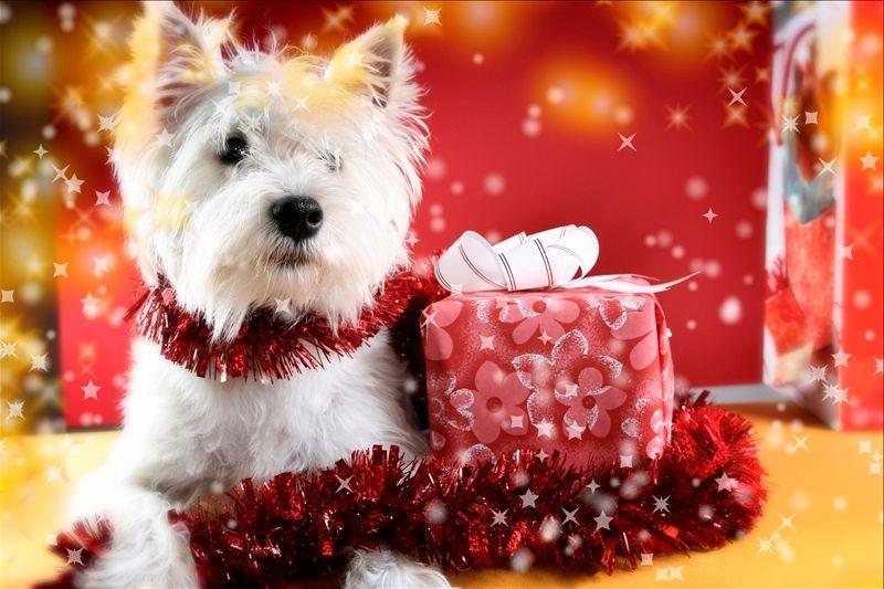 идеи подарков на Новый год любимому, родным, коллегам