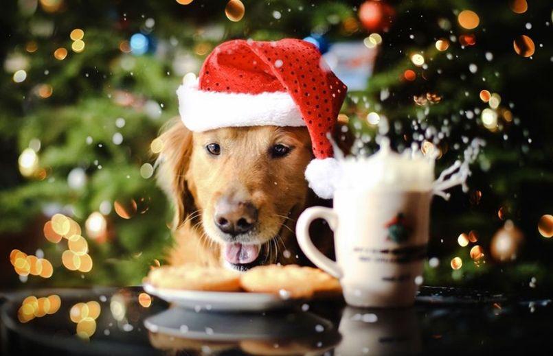 Сценарий встречи Нового 2018 года Собаки для взрослых